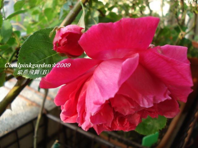 DSC05677.jpg