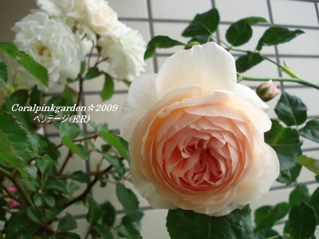 DSC05792.jpg