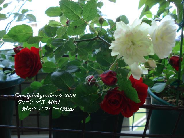 DSC05881.jpg