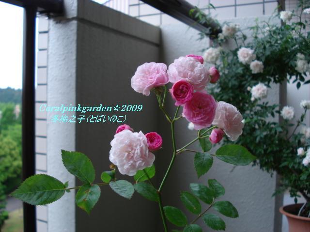 DSC05908.jpg