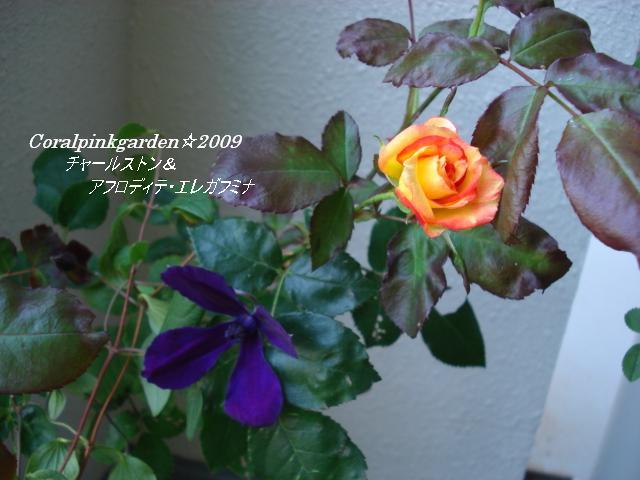 DSC06216.jpg