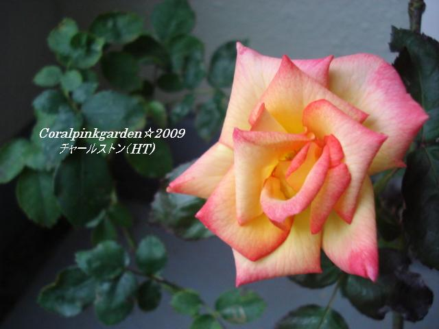 DSC06225.jpg