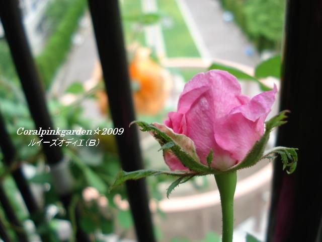 DSC06281.jpg