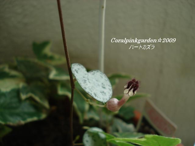 DSC06346.jpg