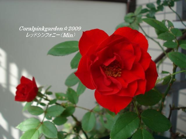 DSC06619.jpg