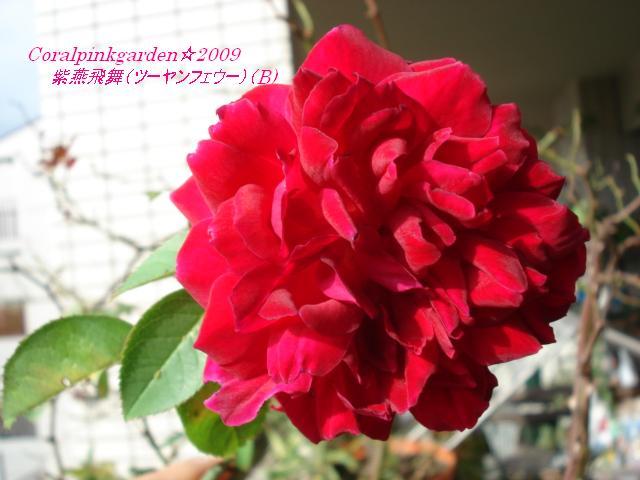 DSC06633.jpg