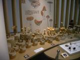 菌類の展示(その2)