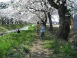 20080429桜-03