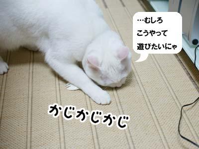 cat1001