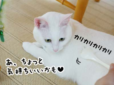cat1002