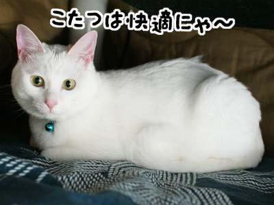 cat1011