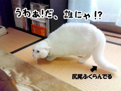 cat1012