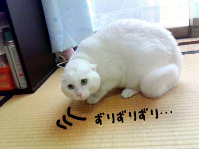 cat1013