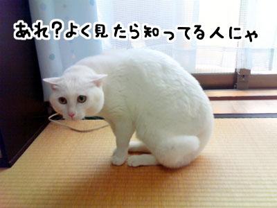 cat1014