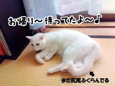 cat1015