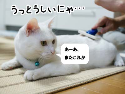 cat1018