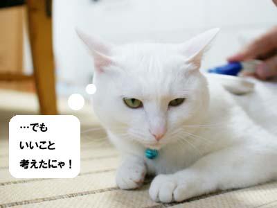 cat1019