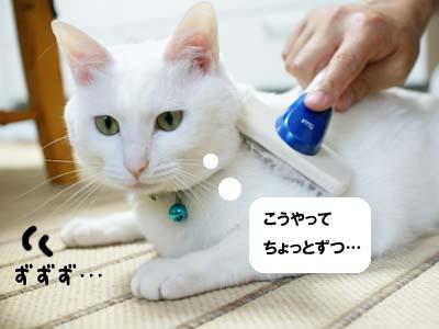cat1020