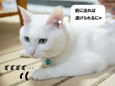 cat1021
