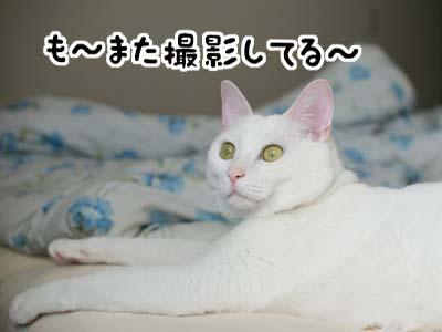 cat1029