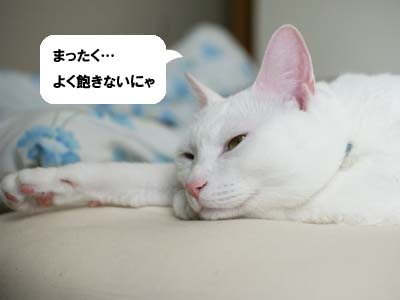 cat1030