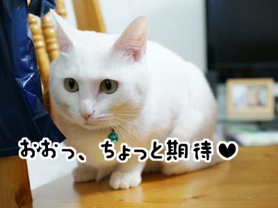 cat1035