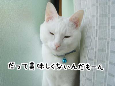 cat1037