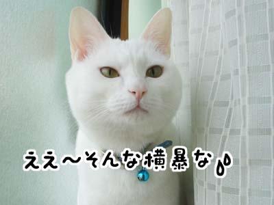 cat1038