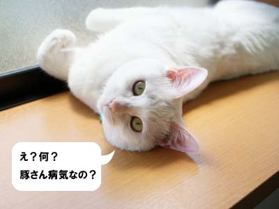 cat1039