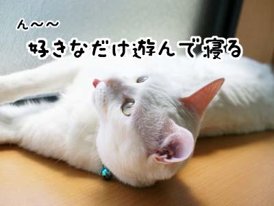 cat1041