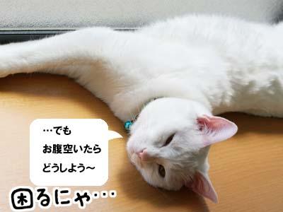 cat1042