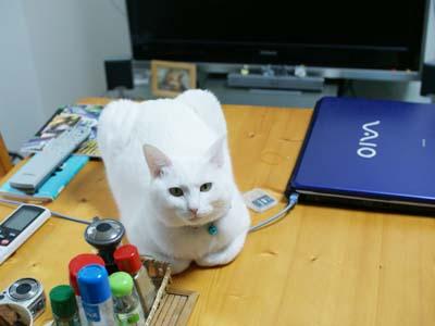 cat1043