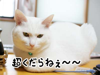 cat1045