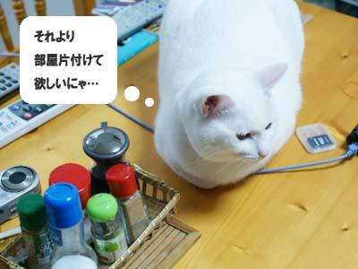 cat1046