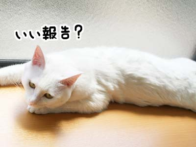 cat1047