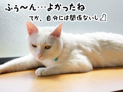 cat1049