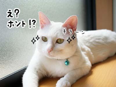 cat1050