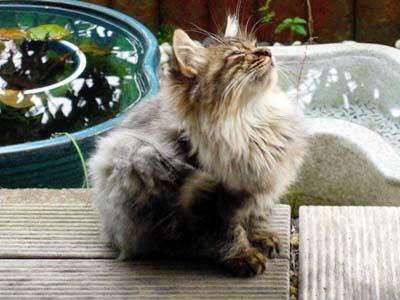 cat1051