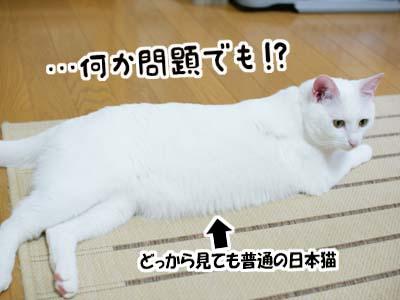 cat1053
