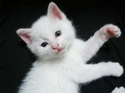 cat1054