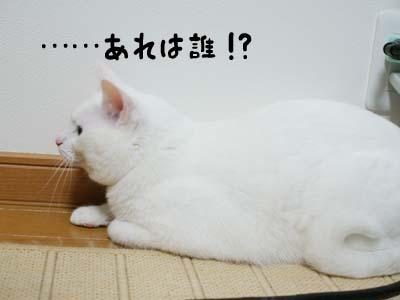 cat1057