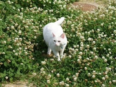 cat1060