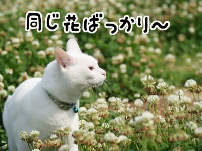 cat1061