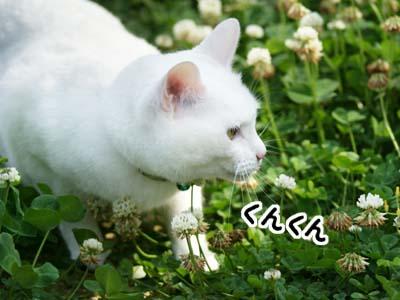 cat1062