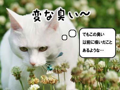 cat1063