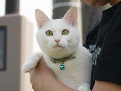 cat1064
