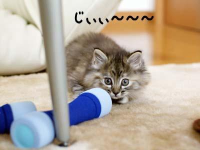 cat1065