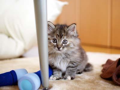 cat1066