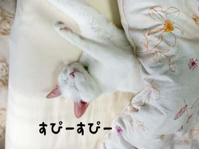 cat1068