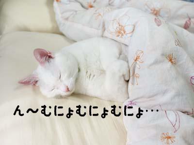 cat1069